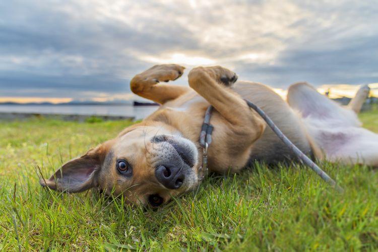 Najlepšie antiparazitikum pre psa
