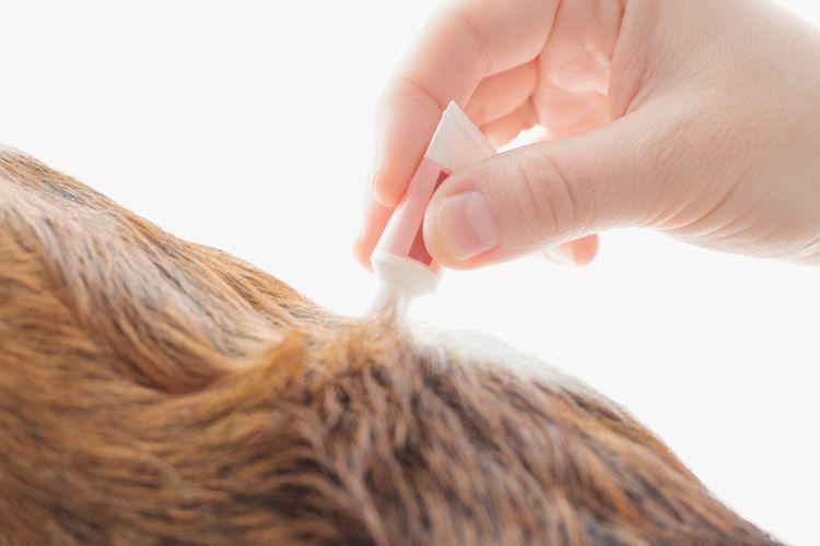 Pipeta proti kliešťom pre psov
